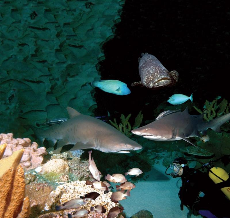 xem cá mập