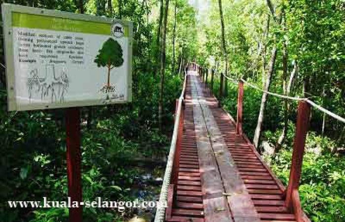 Kuala Selangor Nature Park