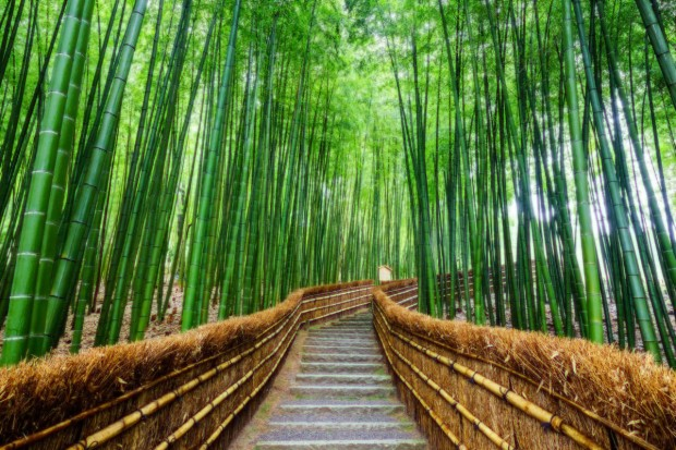 Explore Japan and Enjoy SGD100 Travel Rebates with CheapTickets.sg