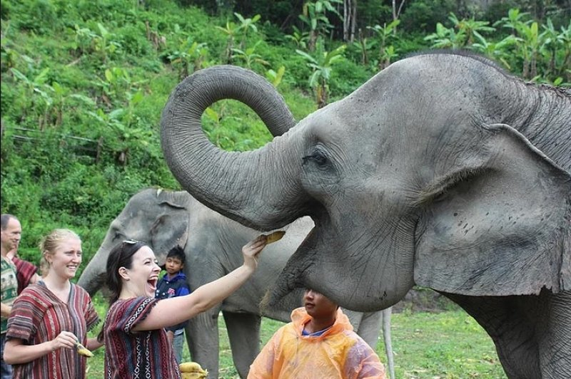 thailand elephant sanctuaries