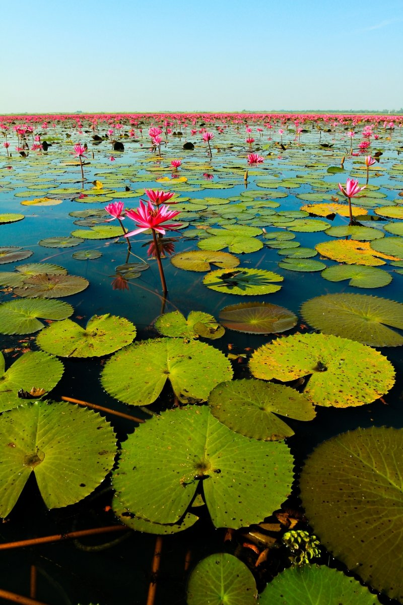 Thailands Must Do Go Boating On The Red Lotus Sea