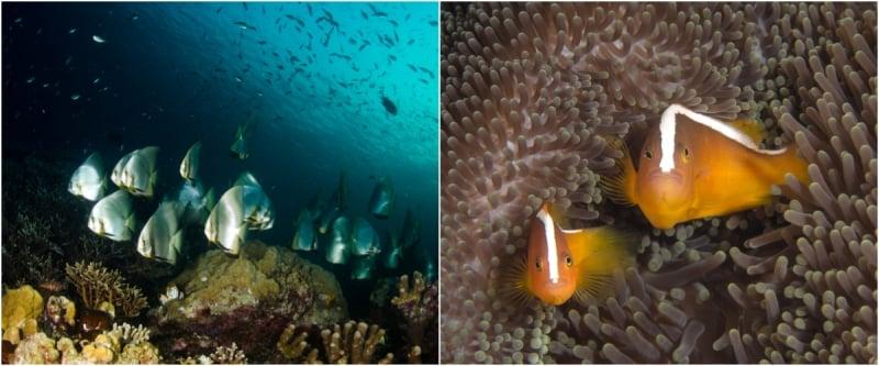 San hô ở Indonesia