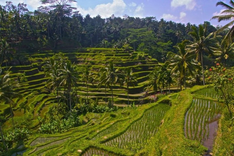 things to do in ubud: Tegalalang Rice Terraces
