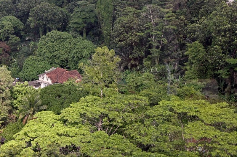 Rừng mưa nhiệt đới malaysia