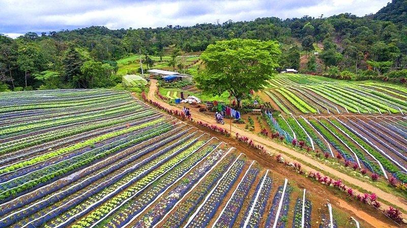 bemwa farm philippines