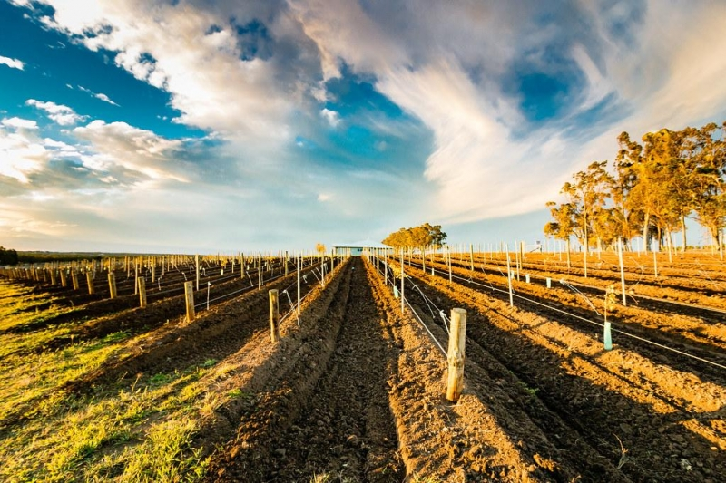 things to do in sydney: hunter valley