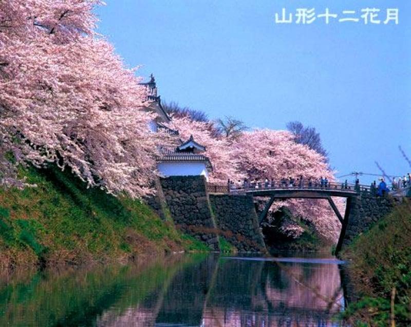 sakura spots in japan