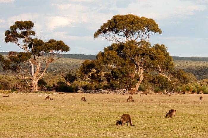 Kangaroo Island, South Australia, Adelaide