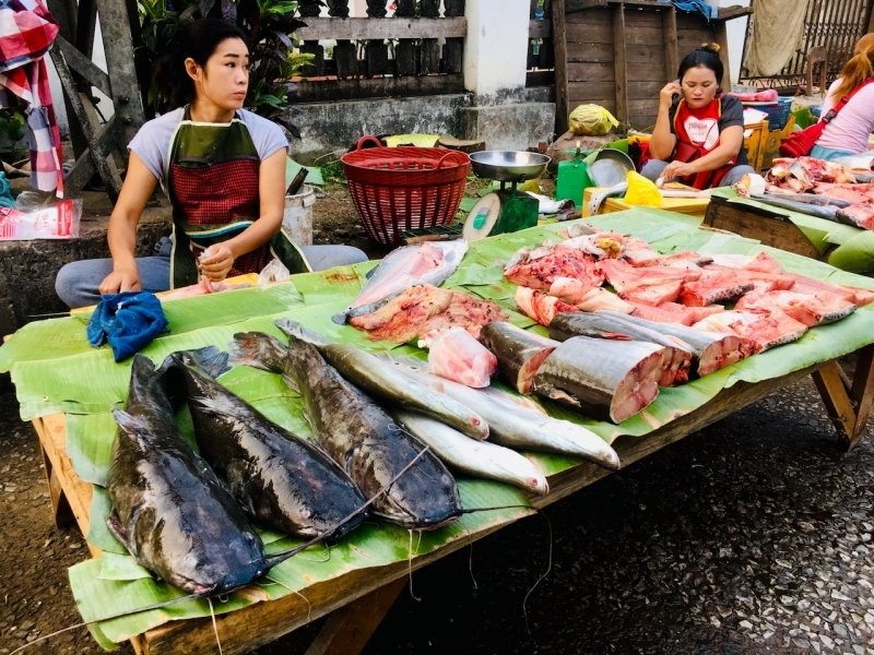 Fresh fish sold at Luang Prabang Morning Market