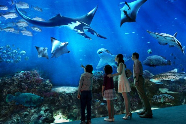 MasterCard® & Resorts World Singapore Online Exclusive - S.E.A. Aquarium Family Bundle