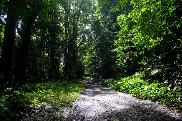 Makiling UPLB Trail