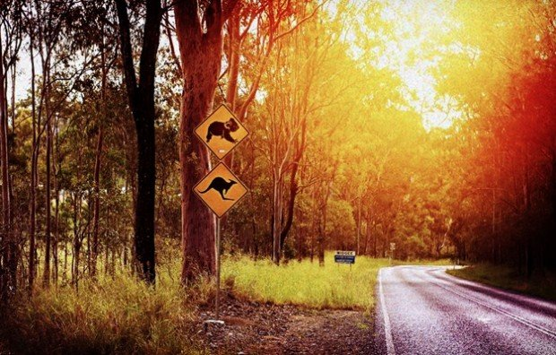 Experience Australia on the Road with Avis and American Express Singapore