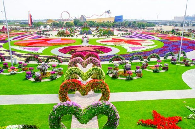 Dubai Miracle Garden Worlds Biggest Natural Flower