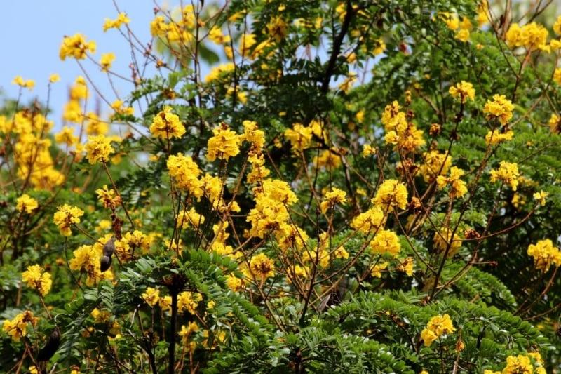 PHILIPPINE NATIVE TREES