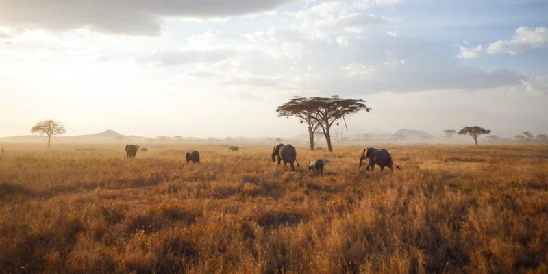 wide shot of an african safari