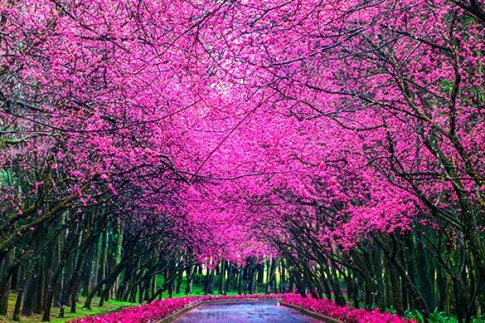 visa free spring destinations filipinos