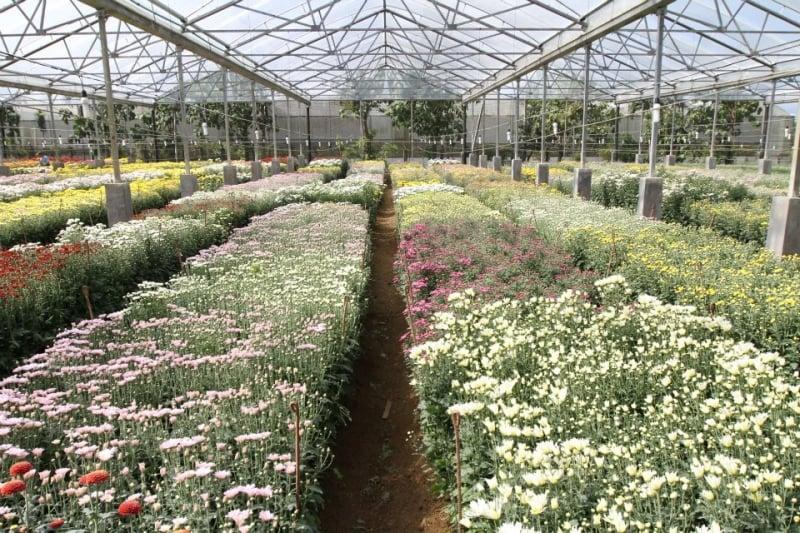 The Flower Farm —Tagaytay, Cavite
