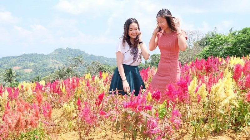 Sirao Flower Farm is one of the flower fields in the Philippines