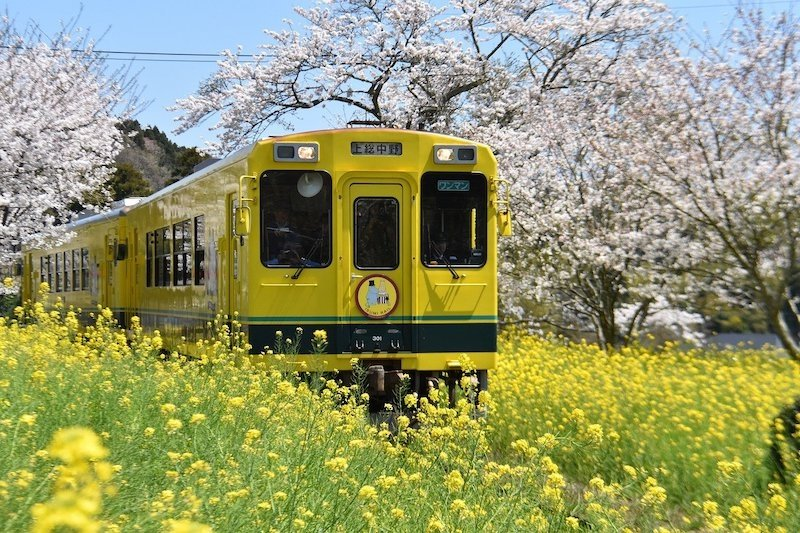 """Japanese words to know: """"Densha"""" means """"train"""""""
