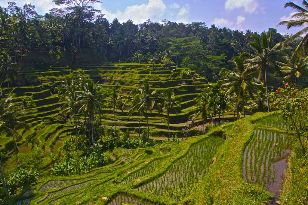 Tegalalung Rice Terrace