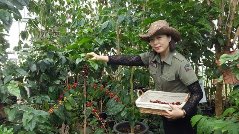Coffee Cupper Museum Farm