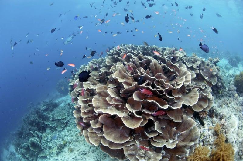 sipadan islands in malaysia