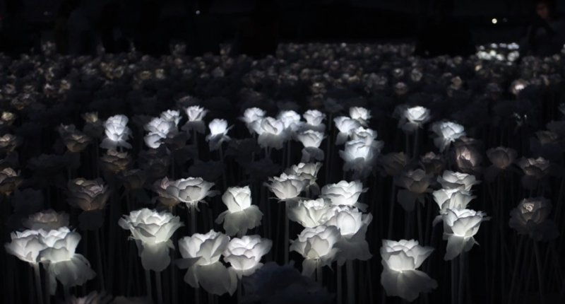 10,000 Roses Cafe