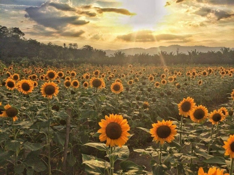 See these lovely flowers in the Philippines at Mariano's Blooming Agri-Tourism Park