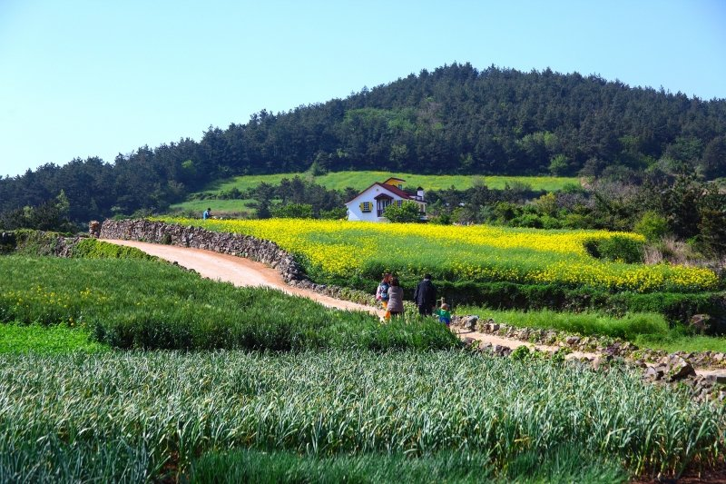 Cheongsando Island - green fields