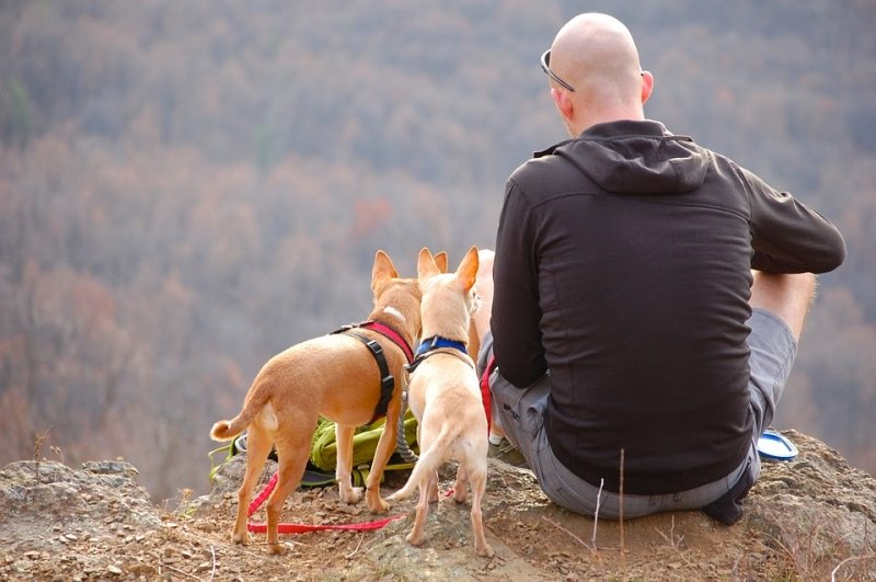 11 Things to Keep in Mind When Travelling with Your Pets