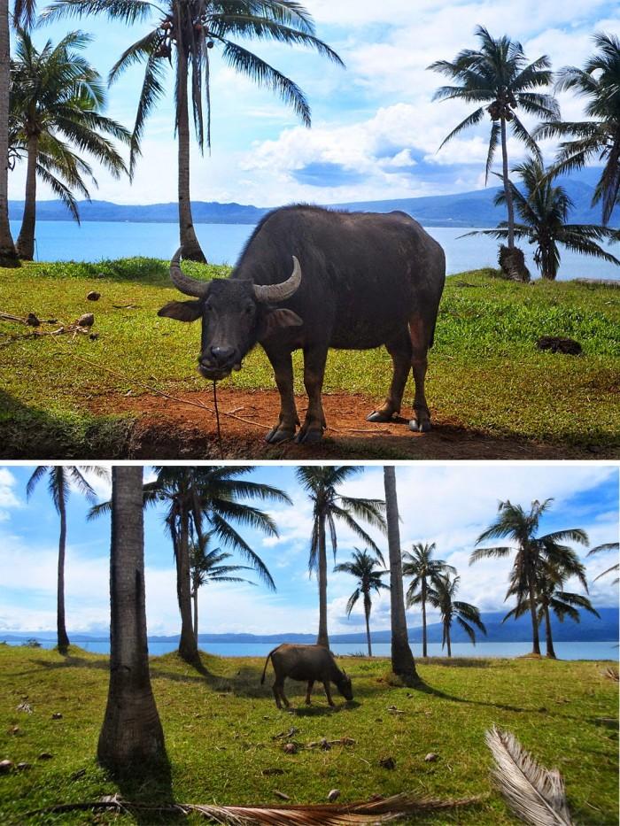 Miguel Island