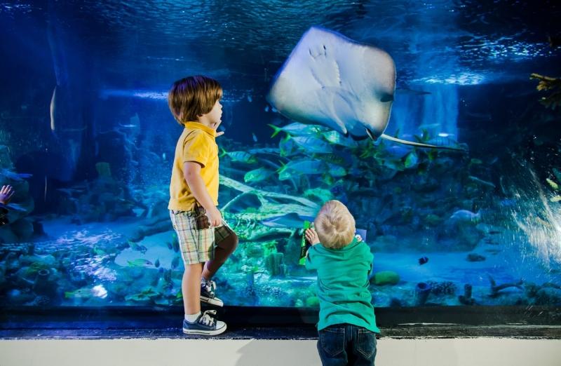 Legoland Malaysia is Opening a Sea Life Aquarium in End 2018