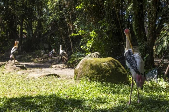 Chơi Gì Ở Penang: công viên chim bird park