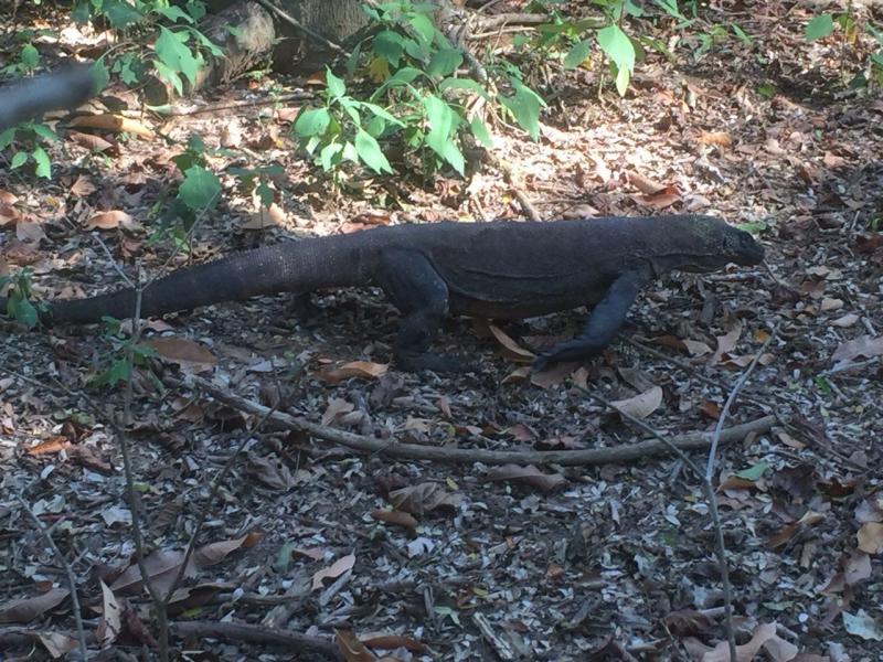 Công viên Komodo