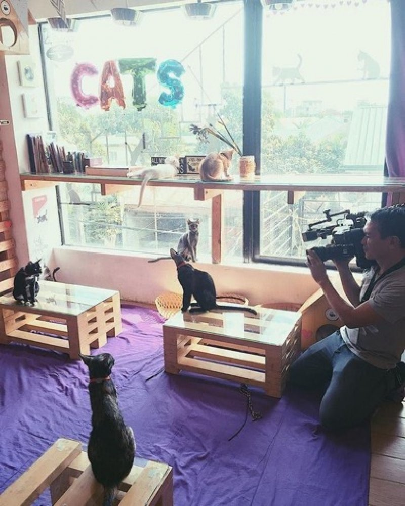 7 Most Adorable Pet Cafés in Manila - Tripzilla Philippines