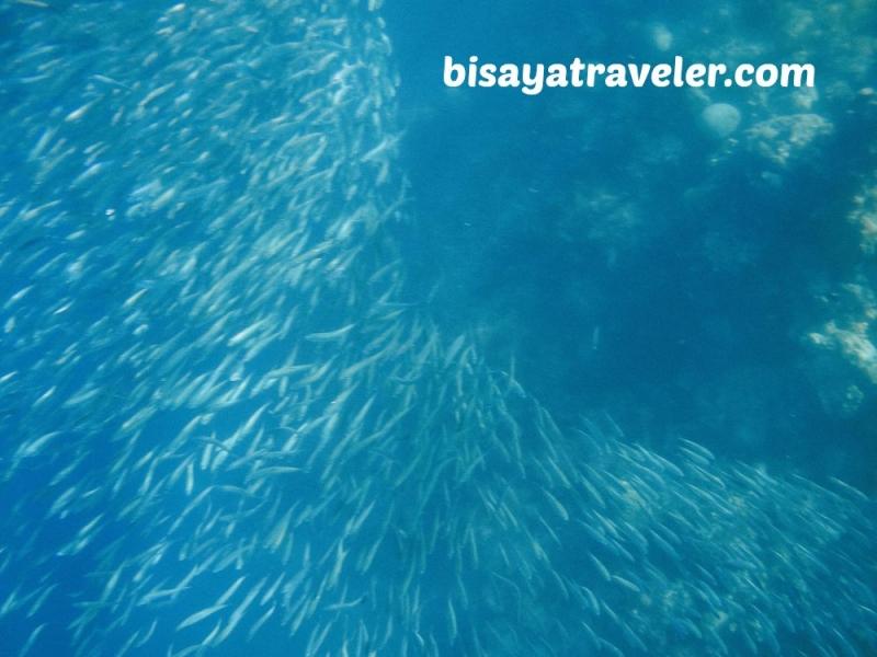 cebu pescador island sardine run