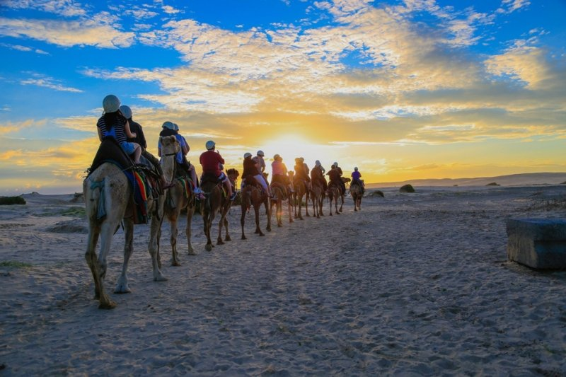 camel riding in port stephens