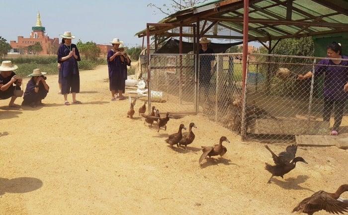 sukhothai airport farming