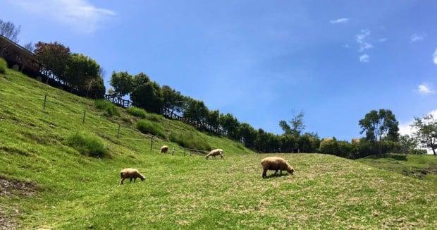Cing Jing Farm