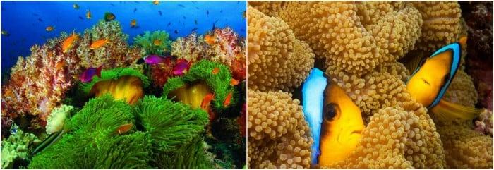fiji marine life