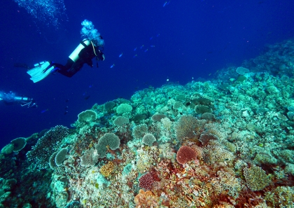 Awesome Coron Diving
