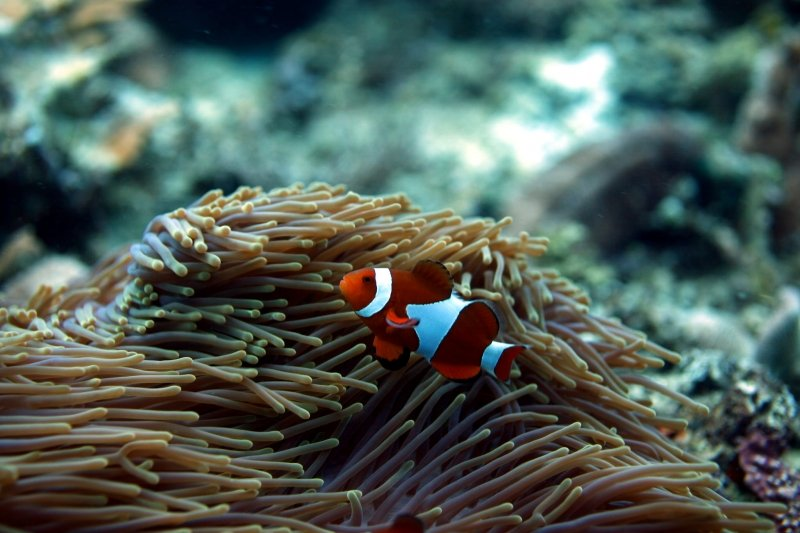best diving spots philippines