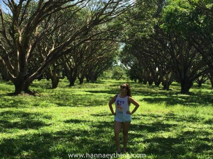 Mango Plantation guimaras