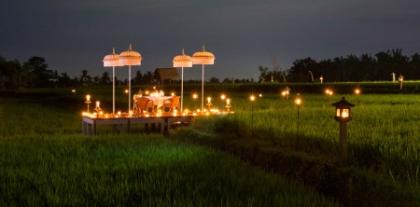 Rice Paddy Romance