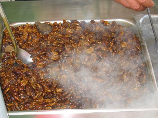 10 Bizarre And Controversial Delicacies To Try In South Korea