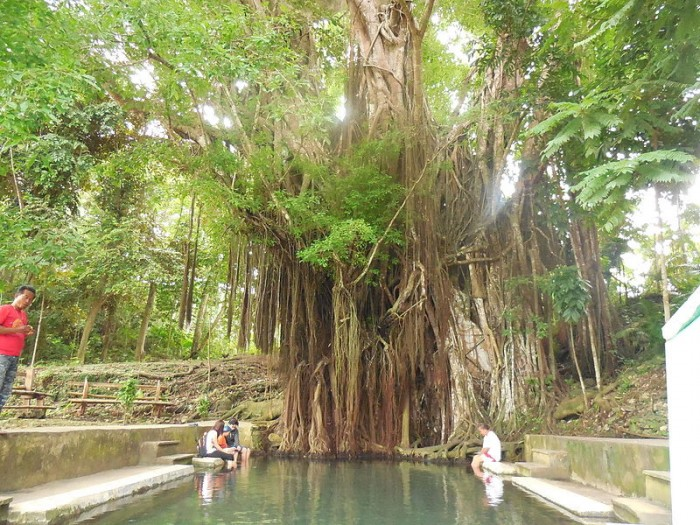 enchanted balete tree siquijor