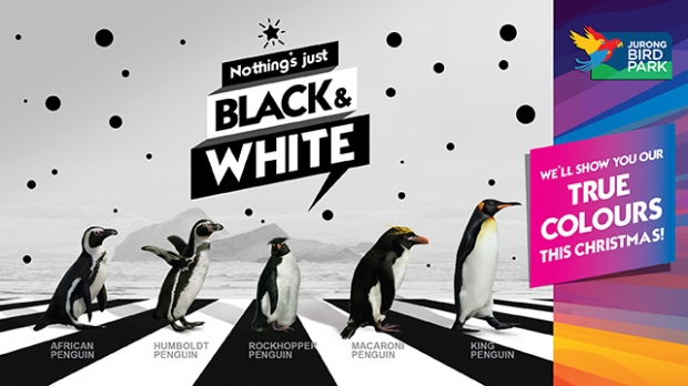 Up to 30% Off Discount in Jurong Bird Park Ticket with NTUC Card