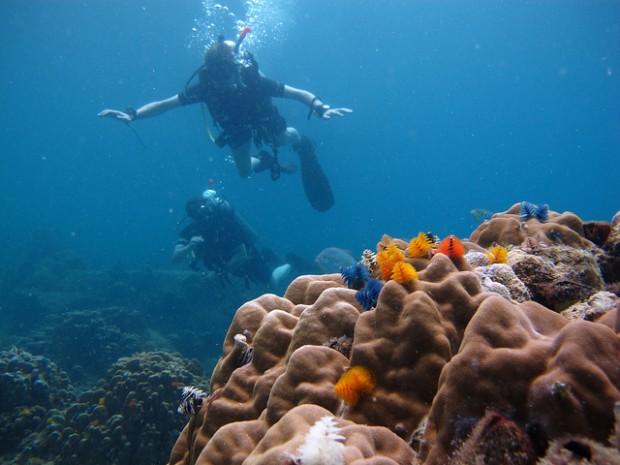 Chơi gì ở Thái Lan: Lặn biển ở Ko Tao