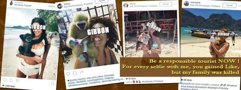 gibbon rehabilitation project animal tourism