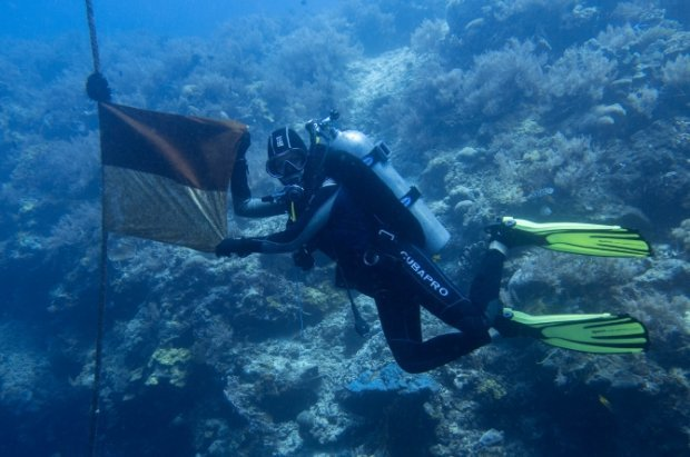 dive safari in bali